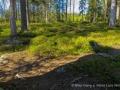 022 baeren finnland