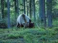 028 baeren finnland