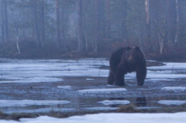 ca. 21.30 uhr-finnland-5_2009