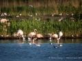 001 flamingos