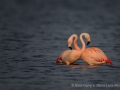 008 flamingos