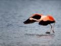 009 flamingos
