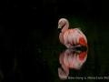 010 flamingos