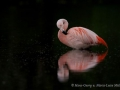 012 flamingos