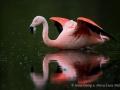 014 flamingos