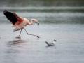 015 flamingos