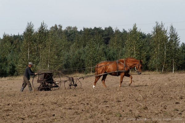 landleben-masuren-9_2009