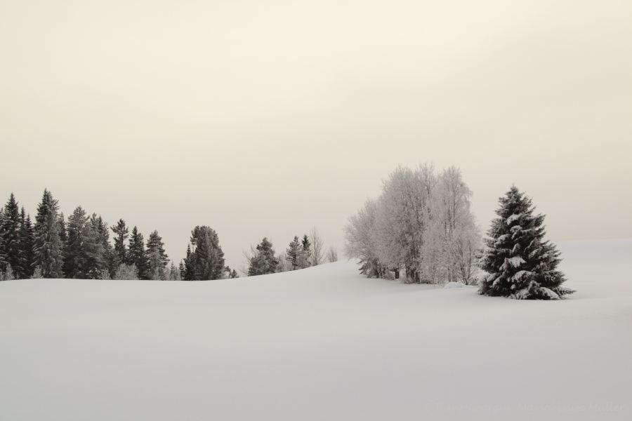 50-schweden-02_2009