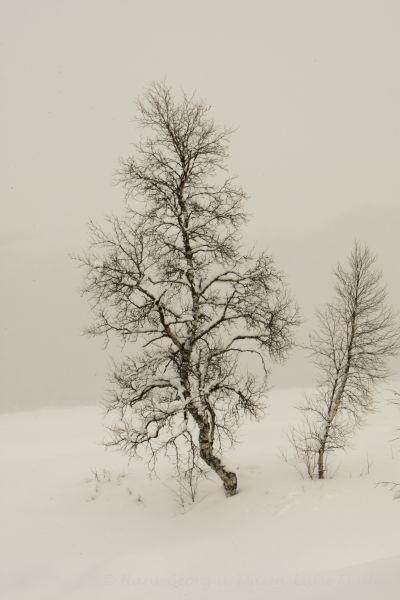 96-schweden-02_2009