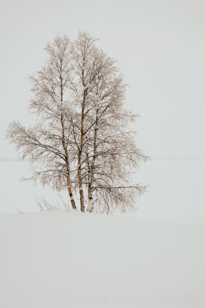98-schweden-02_2009