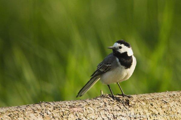 21-vogelbiotop-winzlar