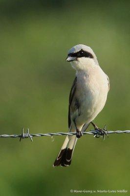 6-vogelbiotop-winzlar