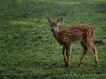 024 wildpark lueneburger heide