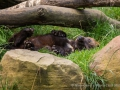 033 wildpark lueneburger heide