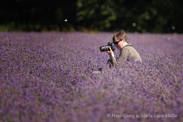 002 lavendel in deutschland