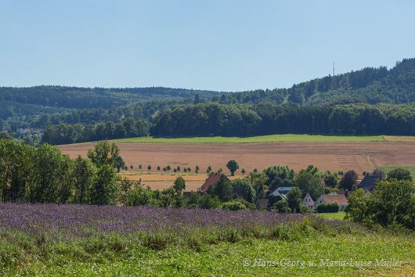 017 lavendel in deutschland