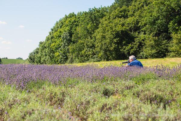 026 lavendel in deutschland