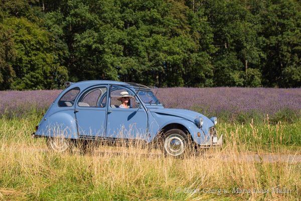 027 lavendel in deutschland