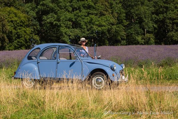 028 lavendel in deutschland